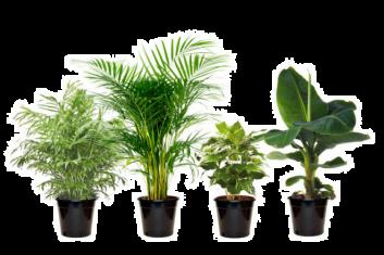 Mix van 4 trendy, exotische kamerplanten