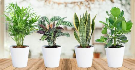 Set van 4 makkelijk te onderhouden kamerplanten