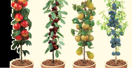 4 winterharde fruitbomen voor minder dan € 35