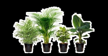Mix de 4 plantes d'intérieur