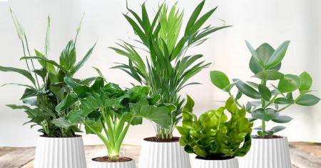 Un set de 5 plantes purificatrices d'air