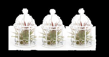 Set van 3 decoratieve Vogelkooitjes met Tillandsia's voor € 22,95