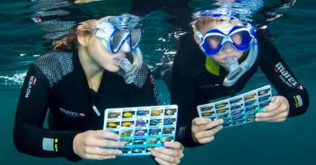 Snorkelen  bij TODI in Beringen voor €10